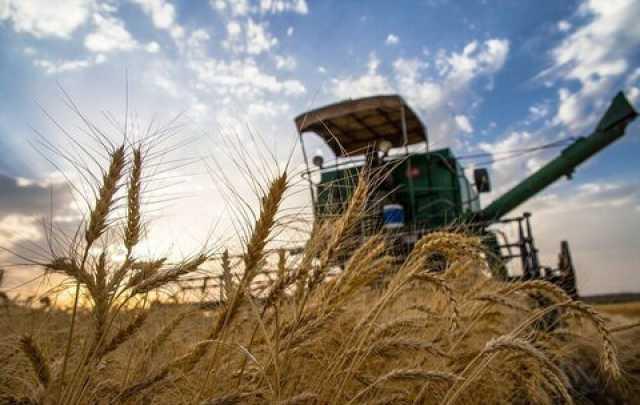 شبکه تعاون روستایی ۲۵ درصد خرید گندم در خراسان رضوی را انجام داد