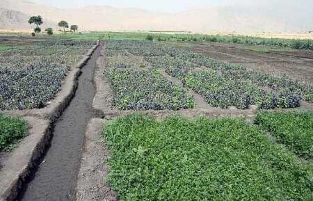 آغاز برداشت محصول طرح باغچههای سالم در مرودشت