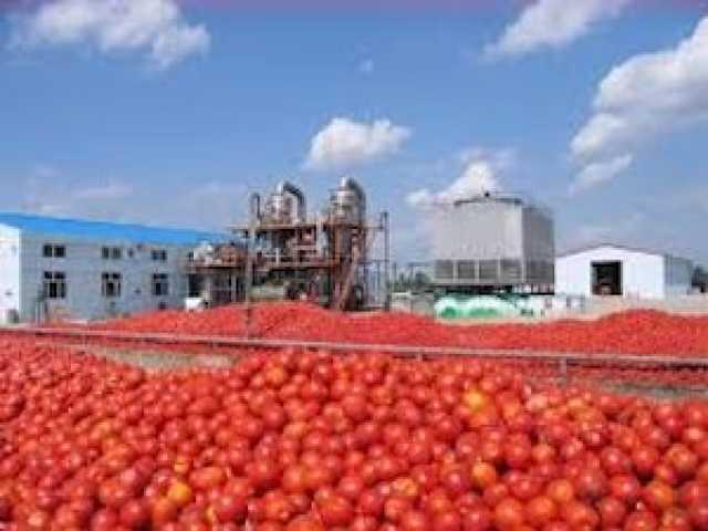 تولید رب ۲۲ هزار تومانی با گوجه هزار تومانی!