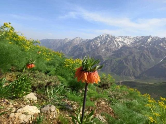 طبیعت بهاری «پیر رستم» در اورامان
