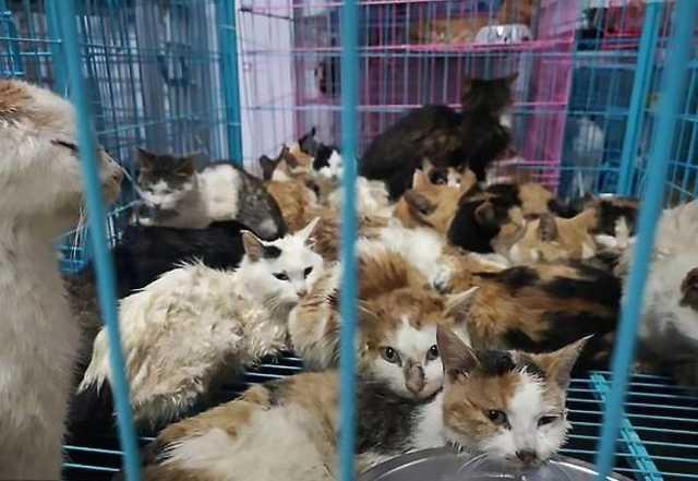 کشف صدها گربه ولگردی که قرار بود شامی لذیذ شوند + فیلم