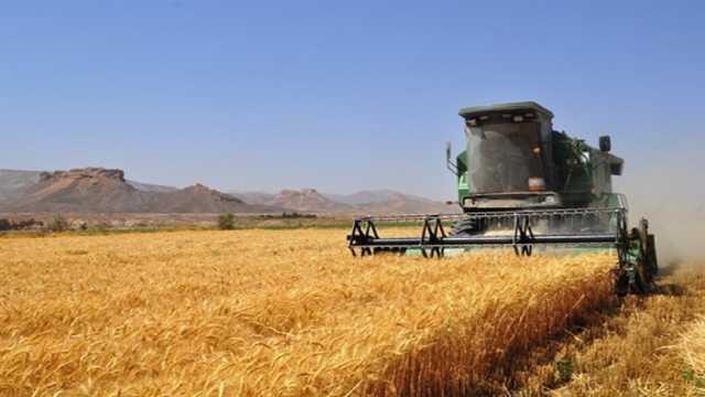 پیش بینی برداشت ۲۰ هزار تن گندم از گندم زارهای شهرکرد