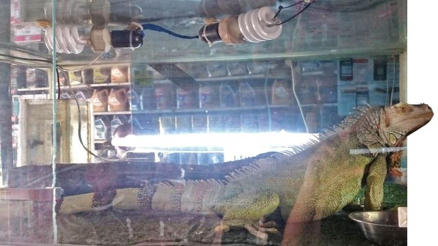 روغن ترمز، لنت، ایگوانا / خرید وفروش حیوان در تعمیرگاه!