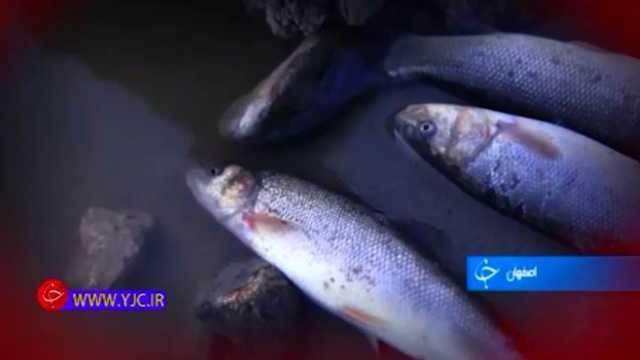 حال زاینده رود خوب نیست، ماهیها نفس نمیکشند+فیلم
