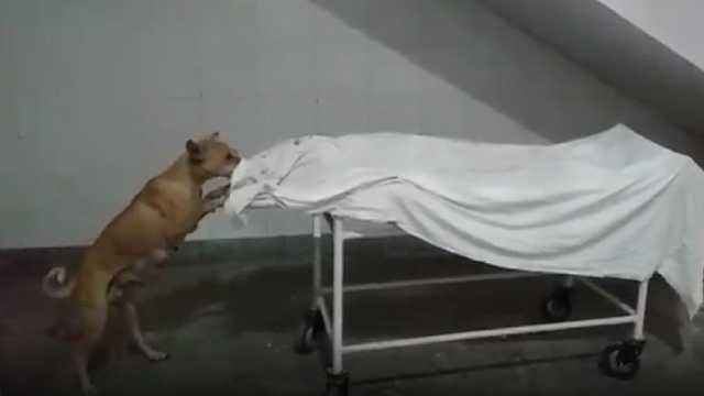 صحنه وحشتناک خورده شدن جسد مرده توسط سگ!