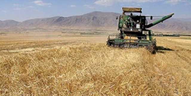 بیش از ۲۰ هزار هکتار از اراضی کشاورزی مشهد زیرکشت جو قرار گرفت