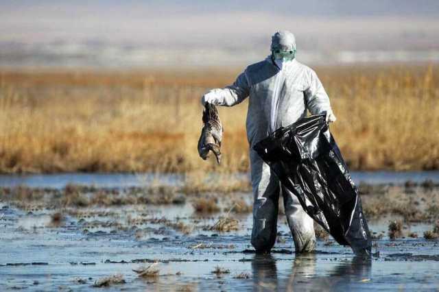 آنفلوآنزای فوق حاد پرندگان در سه استان ایران | آماری از پرندگان تلف شده وجود ندارد