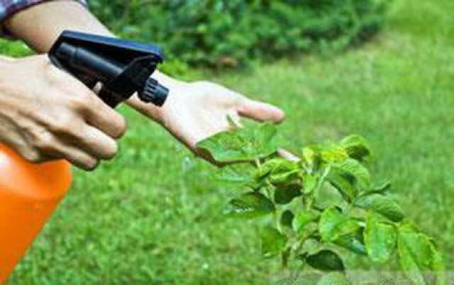 حذف حشرات مقاوم به سم با نانوحشرهکش گیاهی