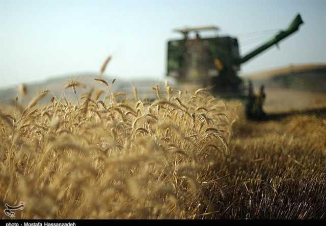 معاون وزیر کشاورزی: تولید کلزا، گندم و جو امسال افزایش مییابد