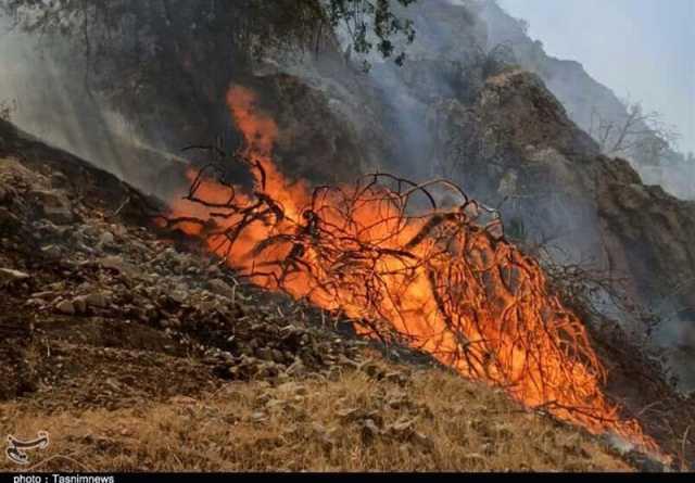 ۹۵ درصد از حریق در ارتفاعات ۳ شهرستان استان فارس مهار شد
