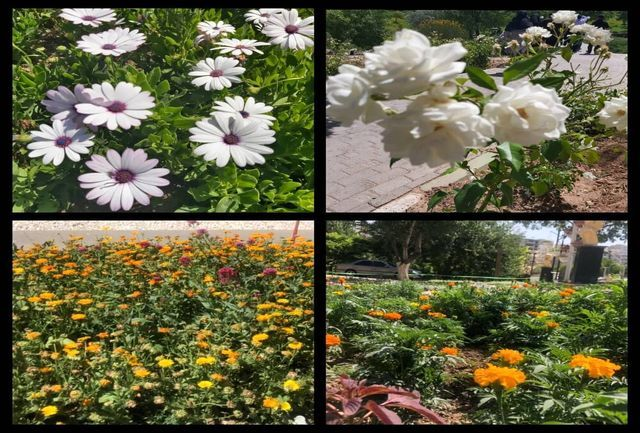 فرش رنگینی از گل ها بر ائل گلی گسترده شد