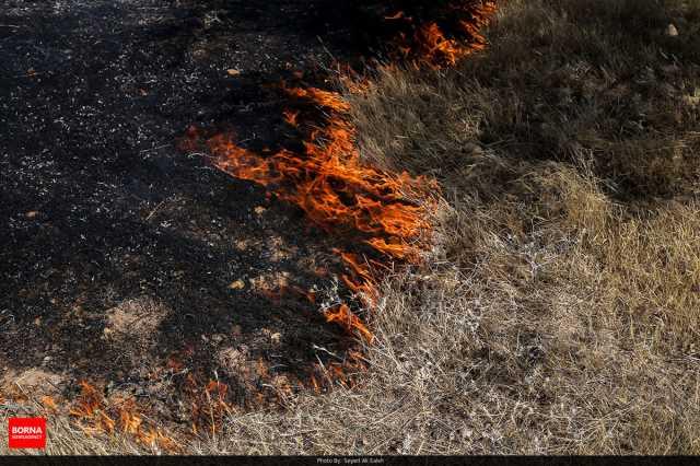 بیمه های بی نام برای همیاران محیط زیست/سرایت آتش از اراضی کشاروزی به جنگلها/ اراضی گندم و جو مستعد آتش سوزی است